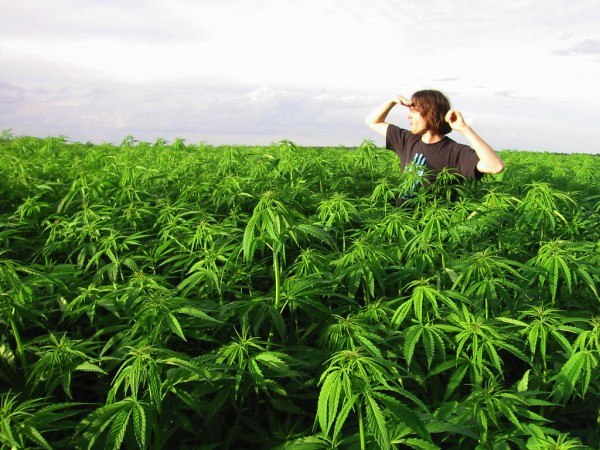 Hundreds of pounds of cannabis seized during Georgia Peach